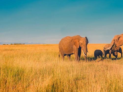 Екскурзия Южна Африка - 11 дни