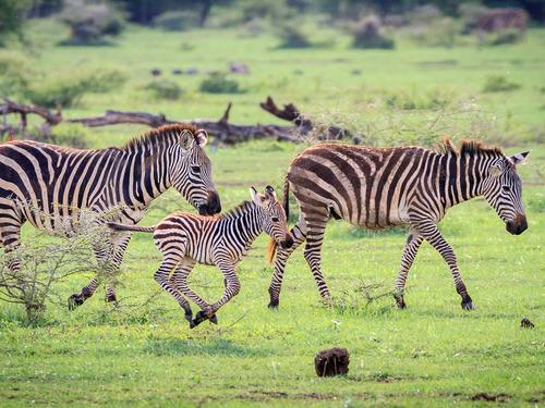 Танзания и Занзибар група с водач